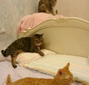 しょこたん ネコ 画像
