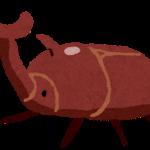 カブトムシ,画像